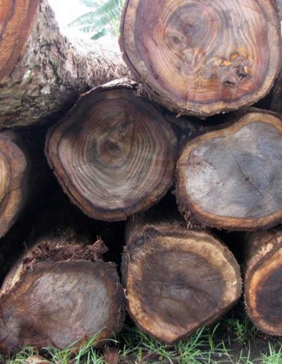 sustainably harvested rosewood logs